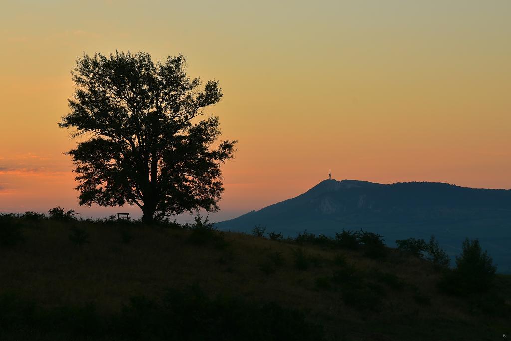 před východem slunce na jihu Moravy