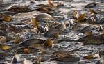 blíží se výlovy rybníků