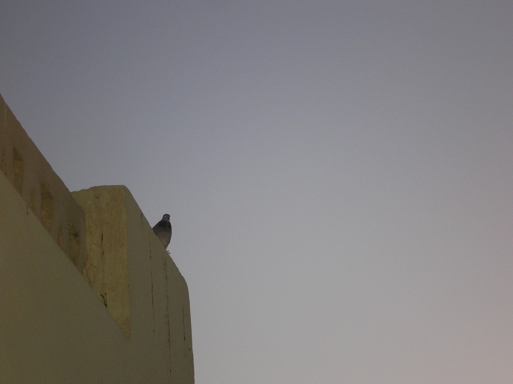 Egypt pozorovatel