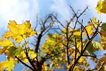 Novembrova Jesen