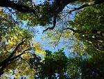 Pohled do koruny stromů