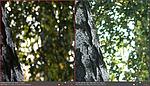 Srovnání hloubky ostrosti při cca 60 mm