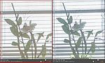 Dynamický rozsah - porovnání Camera Raw (5)