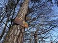 Galerie HX90V - snímek č. 9 tabule na stromě